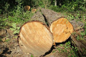 Ag and Timber Sales Tax Exemptions Expire Dec. 31